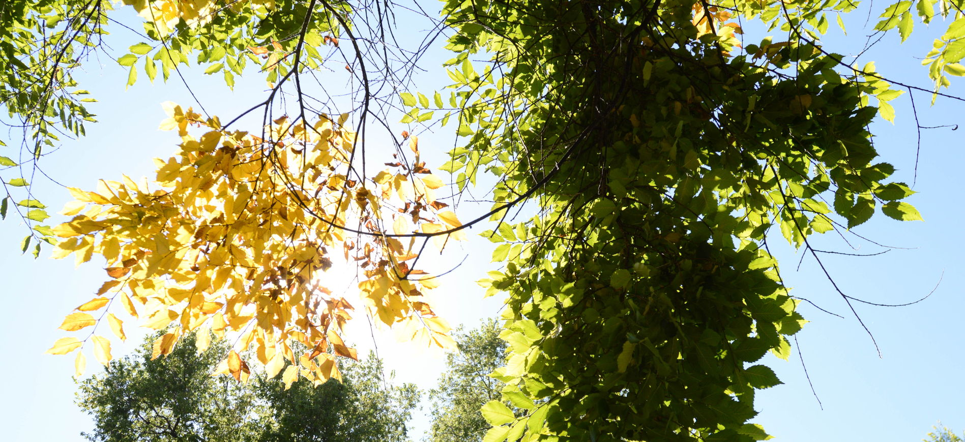 the sun shines through leaves on campus